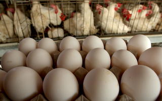 Publix announces another egg recall